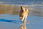 DOG 03 KH0003 01