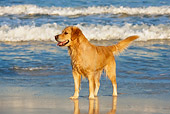 DOG 03 KH0005 01