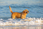DOG 03 KH0006 01