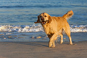 DOG 03 KH0010 01
