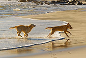 DOG 03 KH0015 01