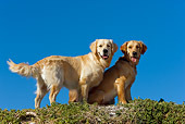 DOG 03 KH0016 01