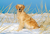 DOG 03 LS0003 01