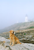 DOG 03 LS0008 01