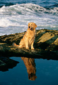 DOG 03 LS0011 01