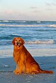 DOG 03 LS0012 01