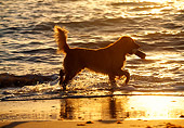 DOG 03 LS0013 01