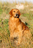 DOG 03 LS0014 01