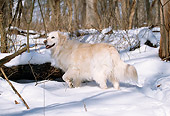 DOG 03 LS0018 01