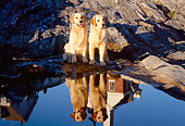 DOG 03 LS0020 01