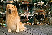 DOG 03 LS0027 01