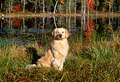 DOG 03 LS0029 01