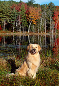 DOG 03 LS0030 01