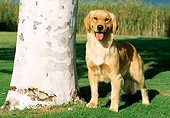 DOG 03 LS0032 01