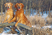 DOG 03 LS0036 01