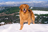 DOG 03 LS0038 01