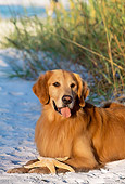 DOG 03 LS0041 01