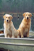 DOG 03 LS0046 01
