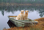 DOG 03 LS0047 01