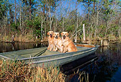 DOG 03 LS0048 01