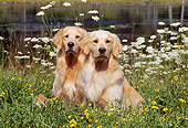 DOG 03 LS0049 01
