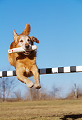 DOG 03 LS0051 01