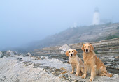 DOG 03 LS0053 01