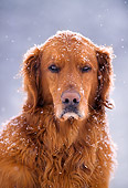 DOG 03 NE0001 01