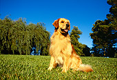 DOG 03 RK0009 04