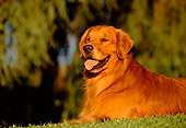 DOG 03 RK0017 01