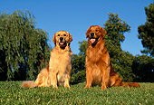 DOG 03 RK0028 05