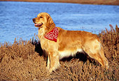 DOG 03 RK0034 04