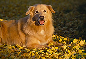 DOG 03 RK0067 03