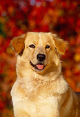 DOG 03 RK0106 03