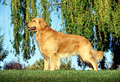 DOG 03 RK0170 02