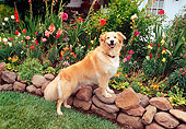 DOG 03 RK0184 07