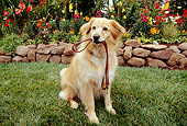 DOG 03 RK0194 11