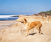 DOG 03 RK0208 01