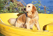 DOG 03 RK0225 02