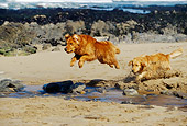 DOG 03 RK0276 03