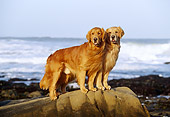 DOG 03 RK0320 11