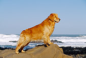 DOG 03 RK0325 01