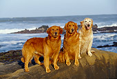 DOG 03 RK0327 01