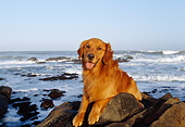 DOG 03 RK0333 05