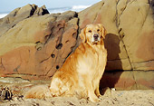 DOG 03 RK0344 07