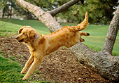 DOG 03 RK0357 03