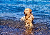 DOG 03 RK0370 01