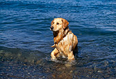 DOG 03 RK0370 02
