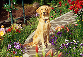DOG 03 RK0373 03