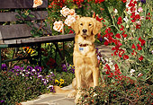 DOG 03 RK0373 09